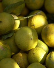 Calabrian bergamots